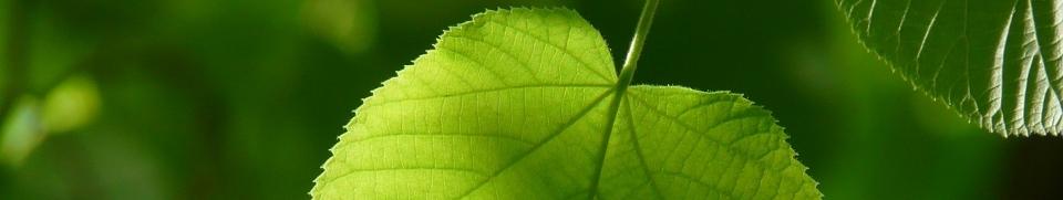 Detersivi Ecologici