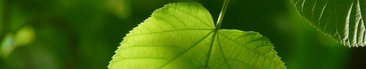 Detersivi Ecologici & altri argomenti…